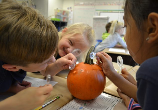 Students use magnifying glass to look at pumpkin.